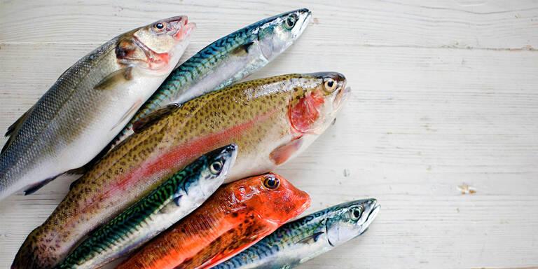 Fisch und Meeresfrüchte nachhaltig kaufen