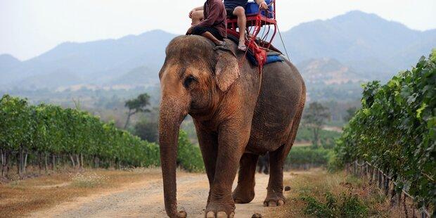 Bus prallt mit Elefanten zusammen - 3 Tote