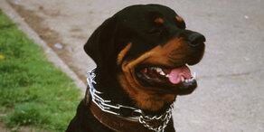 Rottweiler attackierte Mann in NÖ