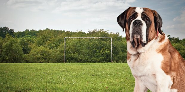 Hund biss auf Sportplatz Kind