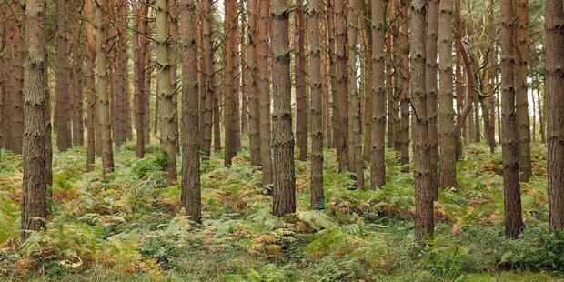 Irre! Diebe stahlen ganzen Wald