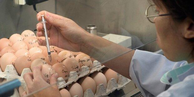 Fipronil: Verwirrung um Gift-Eier