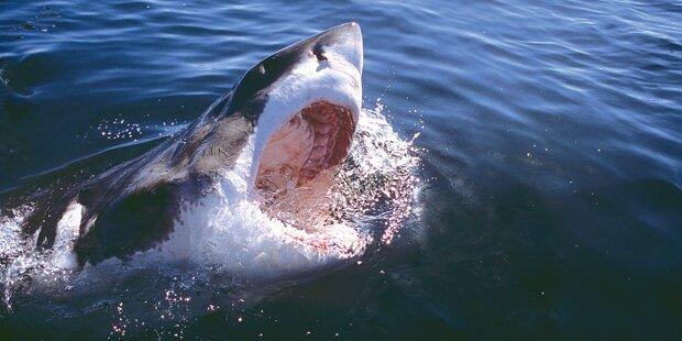 Hai-Attacke: