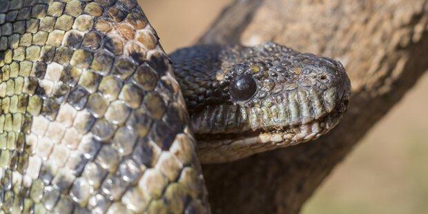 Siebenjähriges Kind von Schlange gebissen