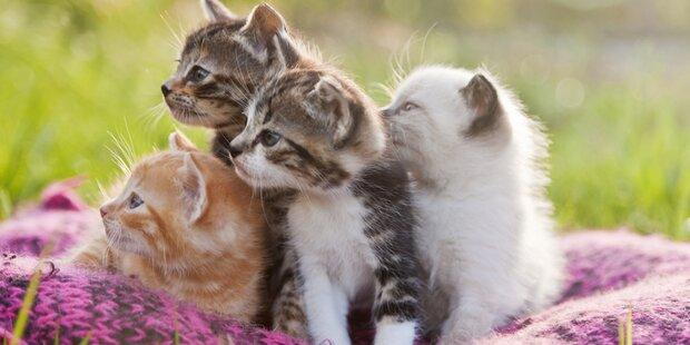 Schlechte Ergebnisse bei Katzenfutter