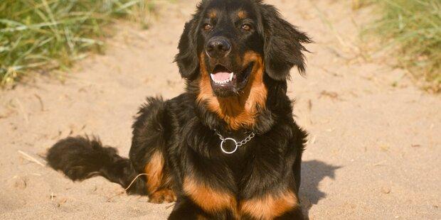 Sonnenbrand-Gefahr bei Haustieren