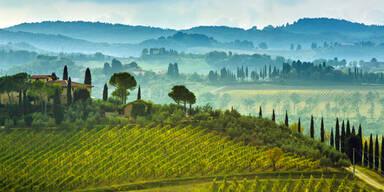 Weinberge Italien