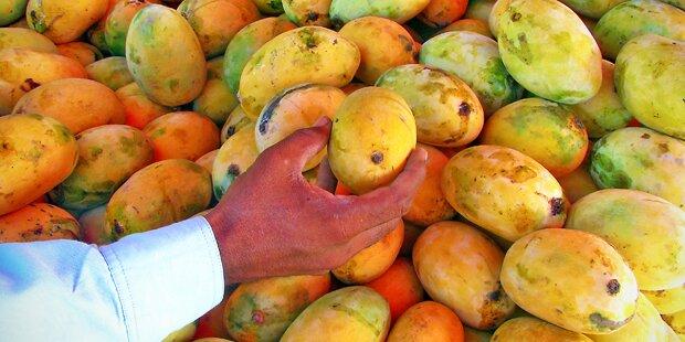 Zu viele Mangos - Obst wird in Manila zu Billigpreisen verkauft