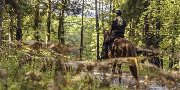 Unfassbar: Schnur über Waldweg gespannt - Reiterin verletzt