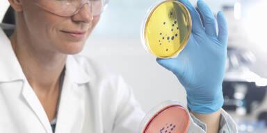 Superkeim antibioikaresistent Labor Bakterien