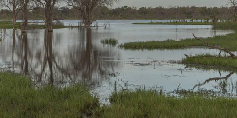 Drei Kinder in Teich ertrunken