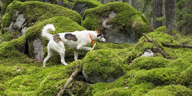 Hund verendet qualvoll in illegaler Fuchs-Falle