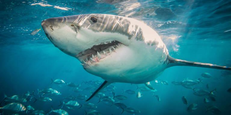 Deutsche Touristin beim Tauchen von Hai angegriffen