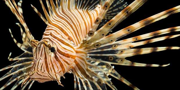 Urlauber zittern vor gefährlichem Exotenfisch im Mittelmeer