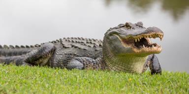 Krokodil an Land