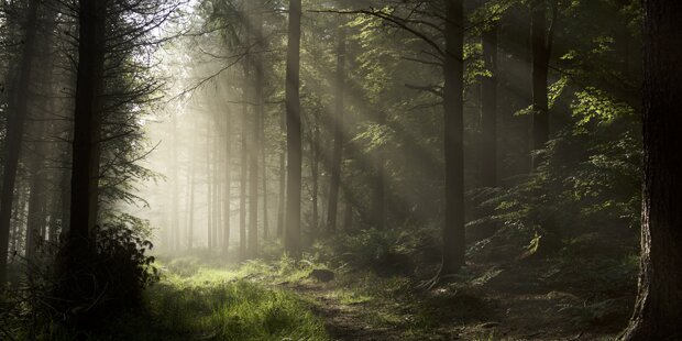 Acht Jugendliche missbrauchen Mädchen (13) im Wald