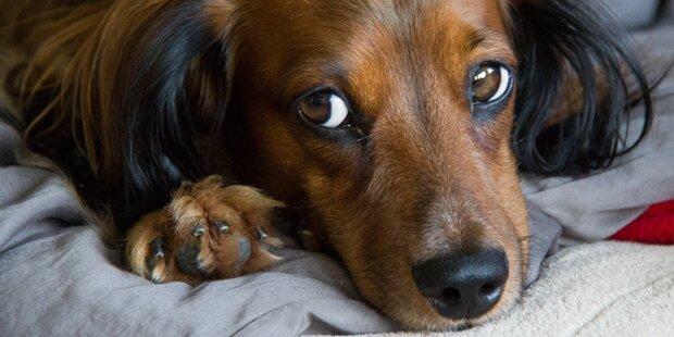 Hund rettete Mann - jetzt sitzt Retter im Tierheim