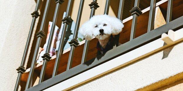 Hund von Balkon geworfen: Haft