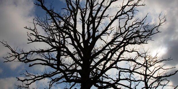 Pensionistin klagt gegen Riesen-Baum