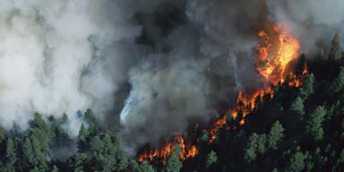 Waldbrand Feuer Flammen