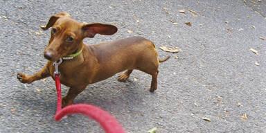 Tierquäler bindet Hund an Pkw – und schleift ihn zu Tode