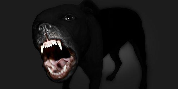 Familienhund beißt Mädchen (2) ins Gesicht