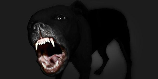 Hund beißt 7-Jährigen, Sanitäter und Frau
