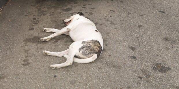 35 tote Hunde in Kärnten gefunden: Frau erhält Tierhalteverbot