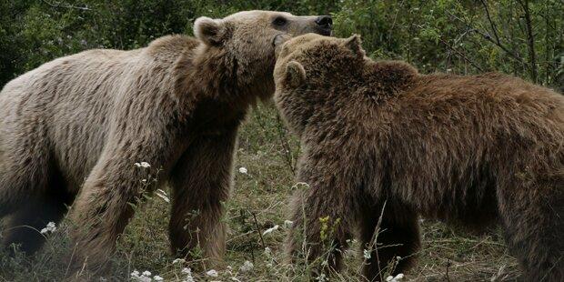 Zwei der ehemals traurigsten Bären vereint