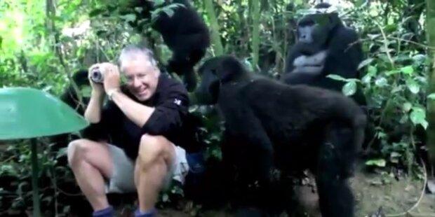 Fotograf von Gorilla Familie umringt