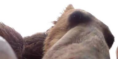Meister Petz hat Kamera zum Fressen gern