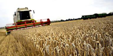 Korn Getreide Landwirtschaft Bauer Mähdrescher
