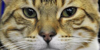 Einbrecher fütterte 120 Katzen durch