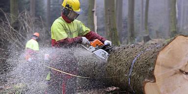 Holzarbeiter Holzfäller