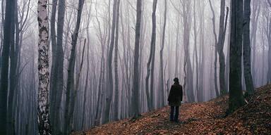 Wien Nebel Winter Wienerwald