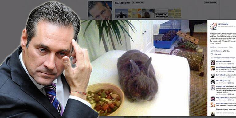 HC Strache trauert um sein Kaninchen