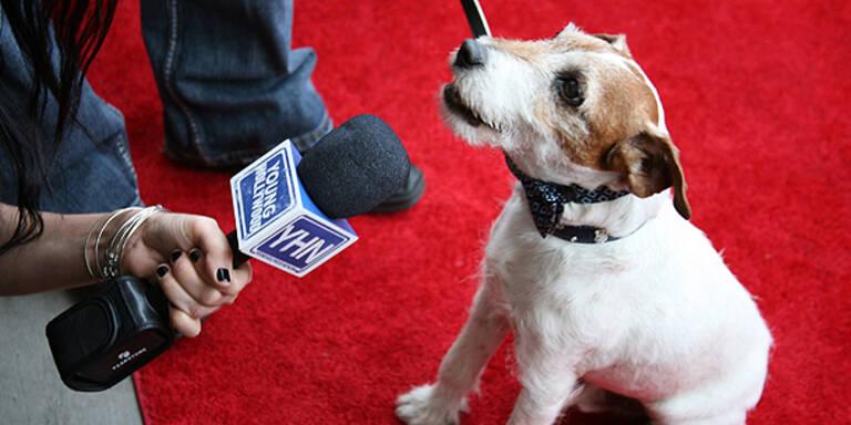 Alle rätseln: Kommt Hund Uggie zur Oscar-Gala?