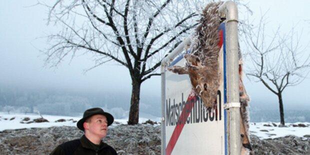 Wilderer hängt Hirsch auf Ortstafel