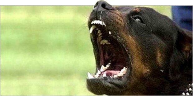 Rottweiler-Attacke bald vor Gericht
