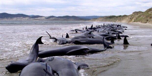 107 gestrandete Wale verendet