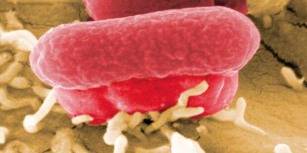 48-Jährige Flachgauerin mit EHEC infiziert