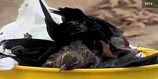 Tausende tote Vögel fallen vom Himmel