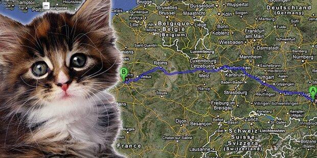 Kätzchen unbemerkt durch Europa geirrt