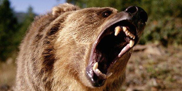 Patrouille macht Jagd auf Bären