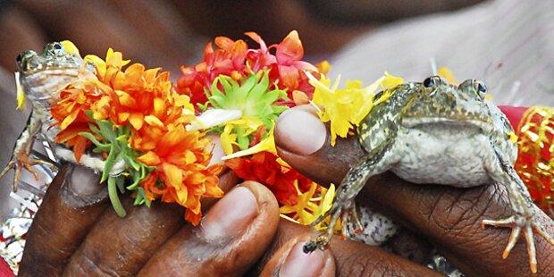 Frosch-Hochzeit soll für Regen sorgen