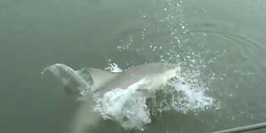 Hai schnappt Anglerin Fisch weg