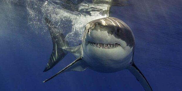 Hai-Attacke auf Französin auf Bodyboard