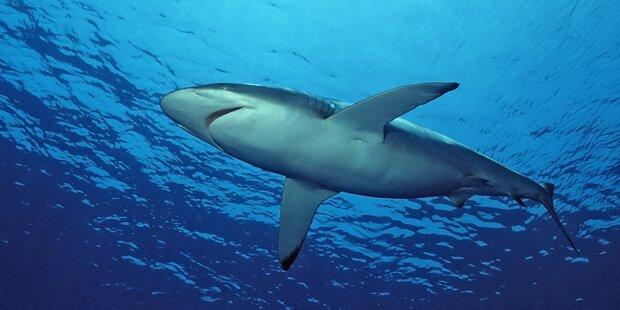 Hai-Angriff: Surfer rettete sich an Land