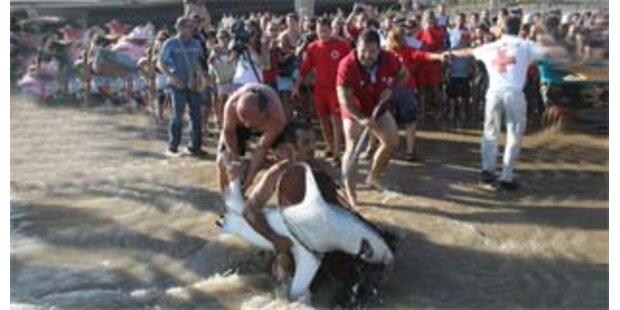 Zwei Meter Hai in spanischem Aquarium gestorben