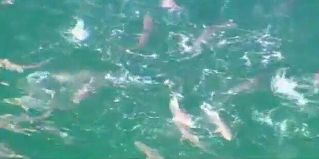 Australien: 50 Haie töten im Blutrausch